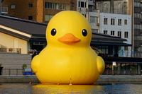 Duckb9jpg